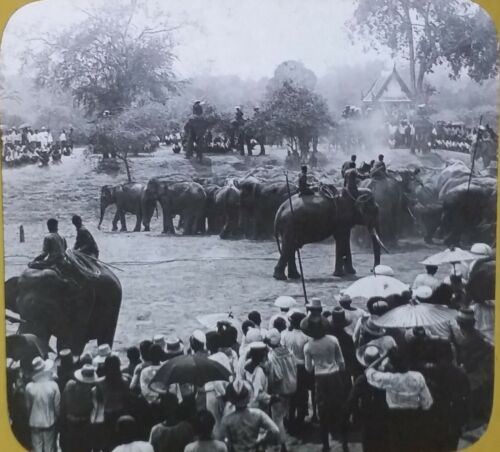 Royal Elephant Hunt, Siam (Now Thailand), Circa 1910s Magic Lantern Glass  Slide