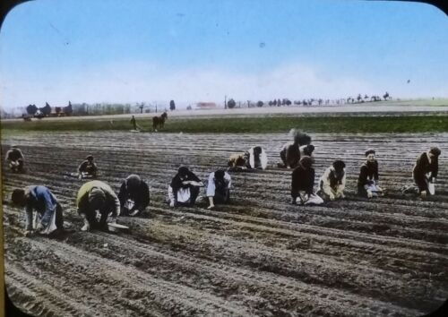 Planting Onions in the Spring, Circa 1910s Magic Lantern Glass Photo Slide