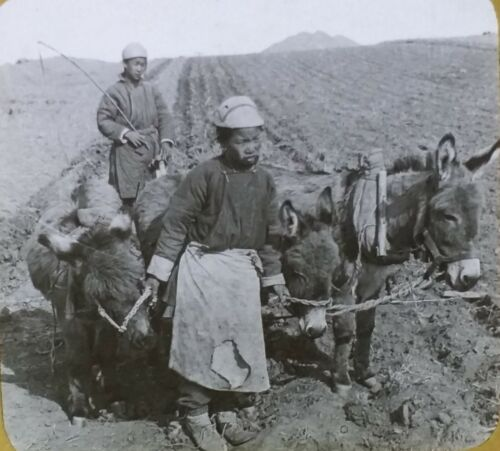 Chinese Boys Plowing Near Port Arthur, Circa 1910's Magic Lantern Glass Slide