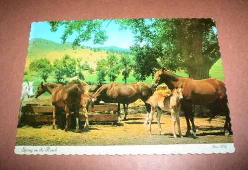 POSTCARD VINTAGE SPRING ON THE RANCH HORSES