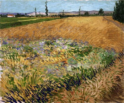 Wheatfield Painting by Vincent van Gogh Art Reproduction