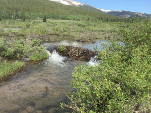 ✅20 ACRE ✅🚩PARK COUNTY COLORADO 🚩GOLD MINING CLAIM PLACER 🔷Fourmile Creek🔷 <br/> 🔷FairPlay District🔷Camp-RV-Prospect