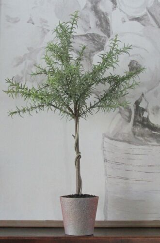 Rosemary Topiary TREE In Pot*Primitive~French Country~Farmhouse Indoor Decor*NEW