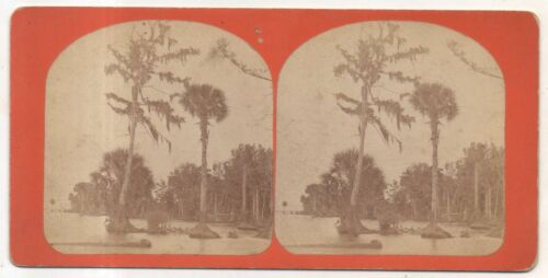 St Saint Johns River, Swamp, Trees, Florida FL Antique Stereoview Card