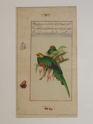 Exquisite Indo Persian Miniature Botanical Ornithological Gouache Painting