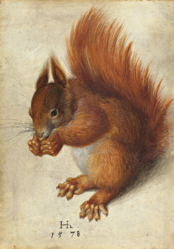 Red Squirrel A1 by Hans Hoffmann High Quality Canvas Print