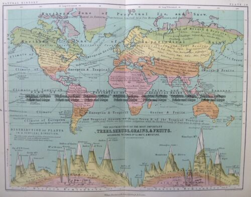 Antique Map 3-391 World - Trees, shrubs, Grains & Fruits c.1851