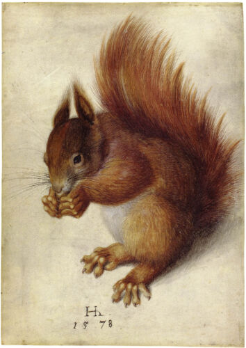 Albrecht Durer: Red Squirrel, after Durer by Hans Hoffmann - Fine Art Print