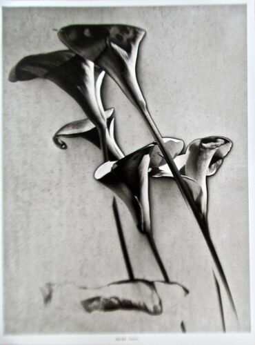 Man Ray Flowers Poster Offset Lithograph Unsigned 14x11 Black/White Photo Image