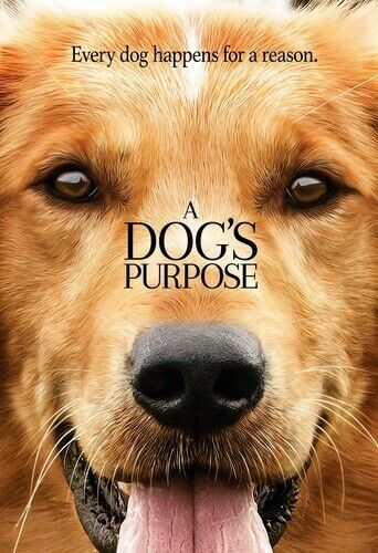 A Dog's Purpose DVD NEW