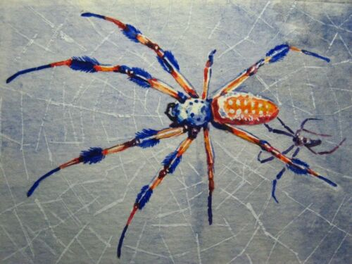Watercolor Painting Spider Web Spiderweb Insect Nature Insect ACEO Art .