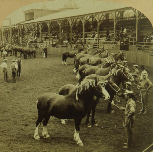 Kilburn Stereoview of the Great Horse Show at the St. Louis World's Fair 1904