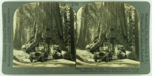 Keystone Stereoview The Wawona Tree, Yosemite N.P. 1920s Scenic America Set #238