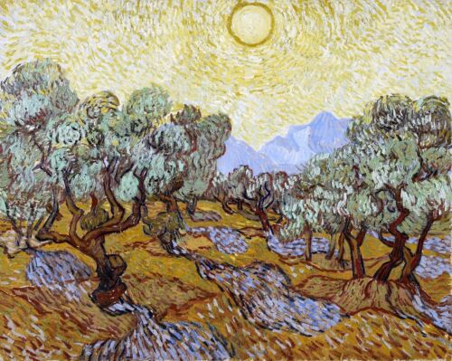 Olive Trees Painting by Vincent van Gogh Art Reproduction