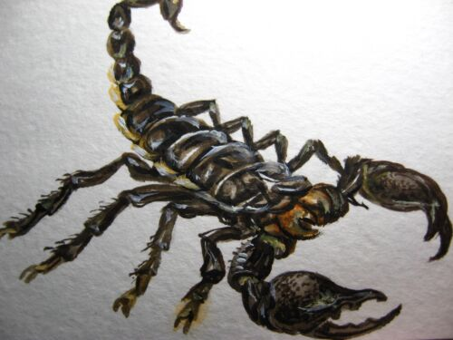 Watercolor Painting Black Scorpio Insect Scorpion Nature ACEO Art .
