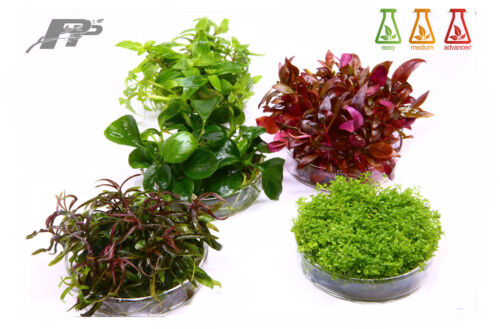 Live Aquarium Plants - In Vitro - 120 Species - Invitro - Fish - Aquascaping <br/> BUY 3 GET 1 Free and Better offers. Free fertilizer