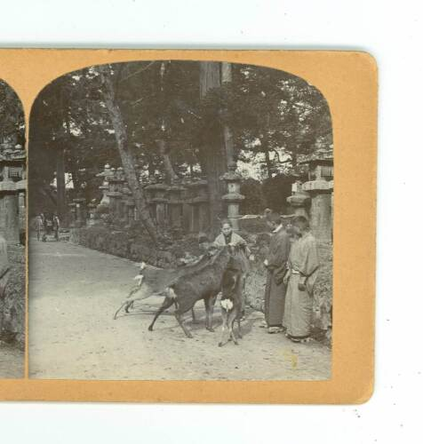 B3483 T Enami view Lady Feeding Deer In A Park, Japan D
