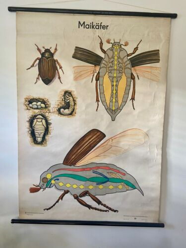 MID CENTURY Vintage GERMAN SCIENCE educational SCHOOL wall chart COCKROACHES