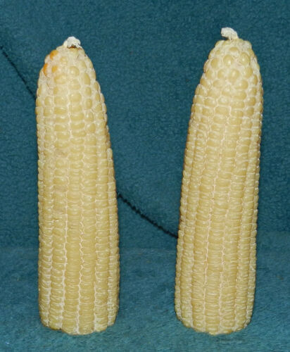 2 NICE REALISTIC CORN CANDLES! THANKSGIVING/FALL!