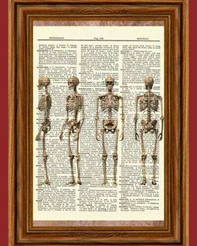 Skeleton Human Anatomy Bones Dictionary Picture Art Print Poster Skull Halloween