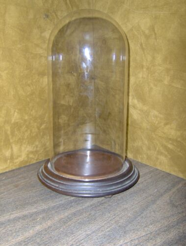 ANTIQUE VICTORIAN GLASS DISPLAY DOME WITH WALNUT BASE 12 INCH NO RESERVE !!