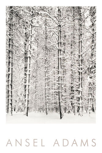 PINE FOREST IN THE SNOW ART PRINT BY PHOTOGRAPHER ANSEL ADAMS Yosemite poster
