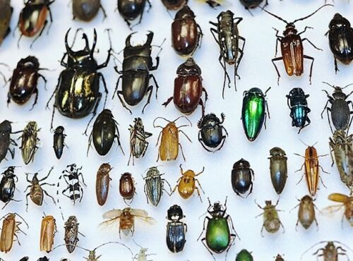 LOT OF 10 BEETLES BUGS INSECTS WHOLESALE MIX
