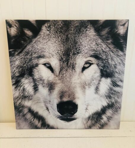 """Great Wolf Lodge Wall Art Picture Nature 16"""" By 16"""" Animal Decor"""