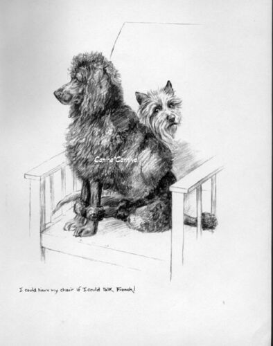 CAIRN TERRIER & FRENCH POODLE K.F. Barker 1933 Sharing Chair Vintage Art Print