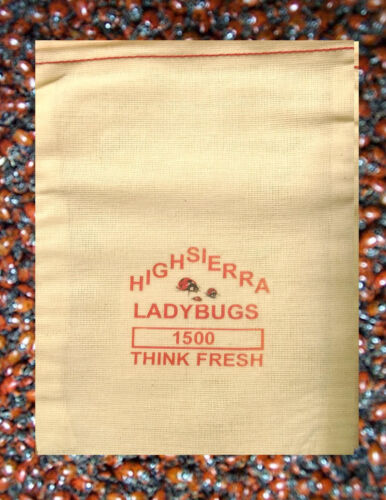 1500 Premium Fresh Live Ladybugs  Think Fresh!!  In Stock Now  <br/> The most trusted source for live ladybugs