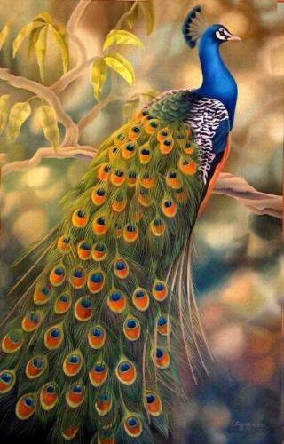 ZWPT306 100% hand-painted modern color peacock art oil painting on canvas