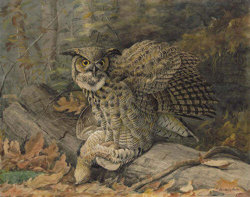 Louis Fuertes Great Horned Owl Print 11 x 14   #5581