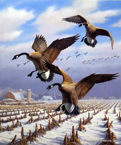 """David Maass """"Winter Wonder"""" Canada Geese Signed and Numbered  Print  18 x 21"""