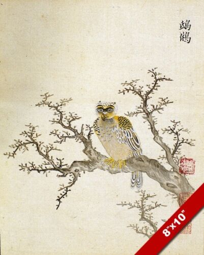 MING CHINESE HERB OWL IN TREE ANIMAL PAINTING PET ASIAN ART REAL CANVAS PRINT