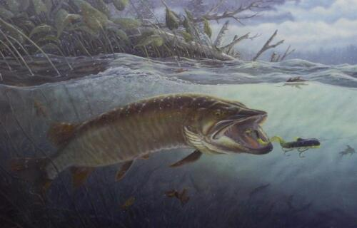 "Terry Doughty "" On The Edge"" Musky Fishing Art Print 25"" x 16"""