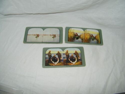 3 vintage Stereograph stereoview photo view cards Duck Hunting 18141