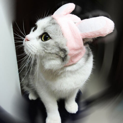 New Pet Cat Dog Cap Hat For Puppy Teddy Shapeshift Cute Bunny Costume Gift