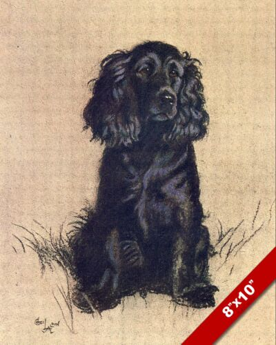 COCKER SPANIEL PET PUPPY DOG ANIMAL ART CECIL ALDIN PAINTING PRINT REAL CANVAS