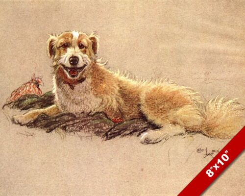YELLOW EYE COLLIE PET DOG ANIMAL ART CECIL ALDIN PAINTING PRINT REAL CANVAS