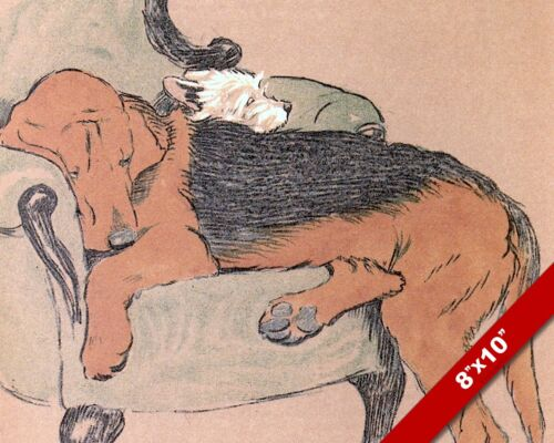 SLEEPING DOGS ON CHAIR PET PUPPY DOG ART CECIL ALDIN PAINTING PRINT REAL CANVAS