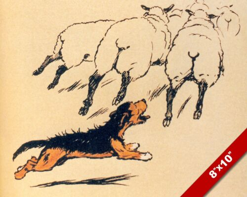 CHASING SHEEP PET PUPPY DOG ANIMAL ART CECIL ALDIN PAINTING PRINT ON REAL CANVAS