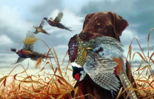 "Field Companion Chocolate  Lab By Scot Storm Dog Pheasant Print  12"" x 8"" Signed"