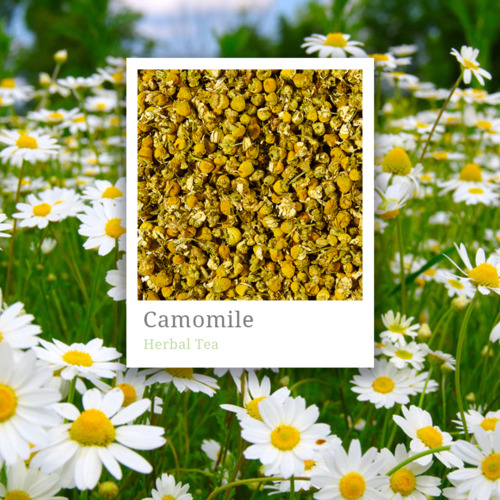 Camomile-Best quality from Croatia