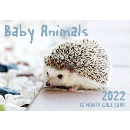 Baby Animals- 2022 Rectangle Wall Calendar 16 Months by IG Design
