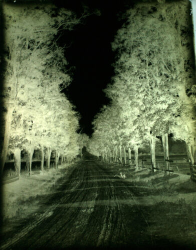 1920S 6X8 GLASS NEGATIVE OF TREE LINED COUNTRY ROAD - GLEN HOPE, PA