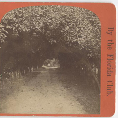 STEREOVIEW, ST.AUGUSTINE VIEWS, LOVERS LANE.