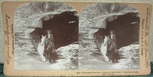 "Keystone Stereoview, ""Father of the Forest"" Calaveras Grove, CA Man & Horse"