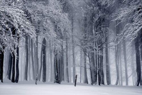 SNOWY WINTER FOREST LANDSCAPE POSTER PRINT STYLE K 24x36 HI RES 9MIL PAPER