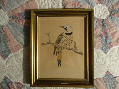 Antique Vintage Framed Bird Drawing of a Yellow Woodpecker