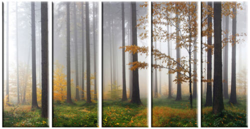 5 Piece Large Nature Autumn Forest Tree nyc Giclee Canvas Wall Art Print Decor